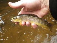 Pêche le 25-03-17 (1)