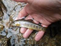 Pêche le 25-03-17 (11)