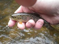 Pêche le 25-03-17 (8)